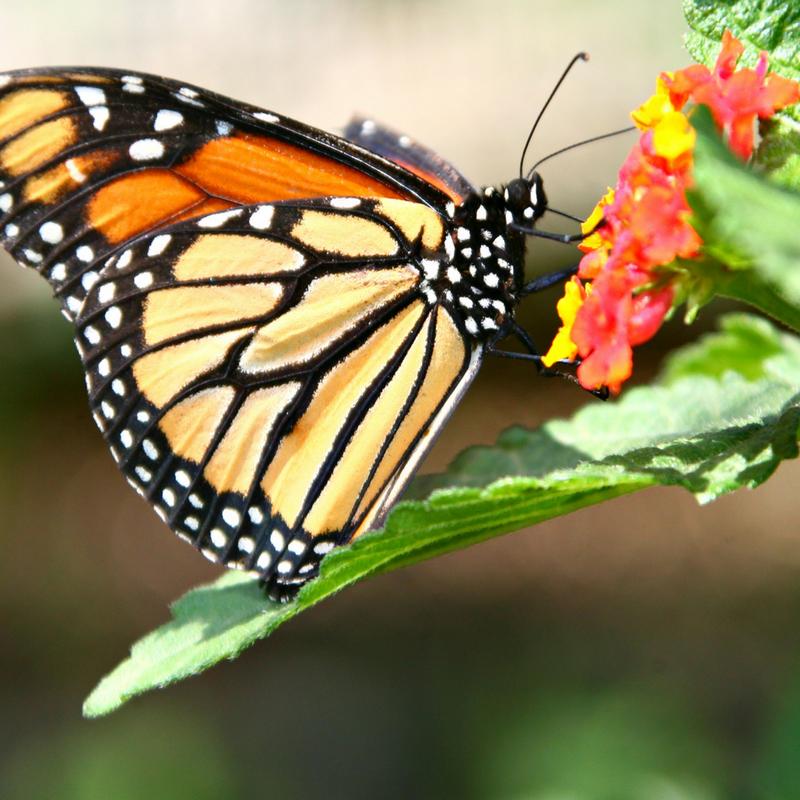 birds butterflies bees