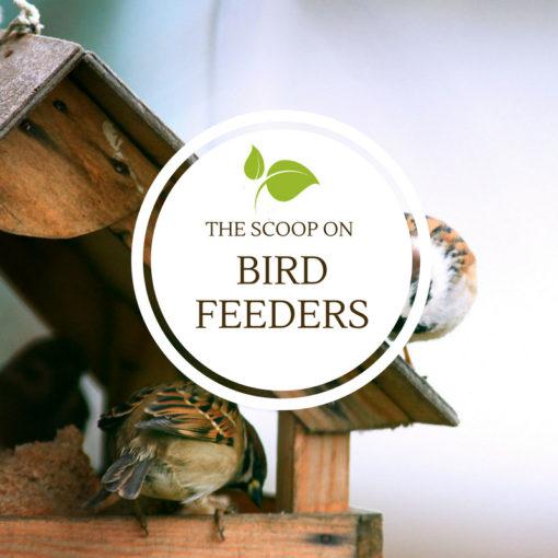 the scoop on birdfeeders