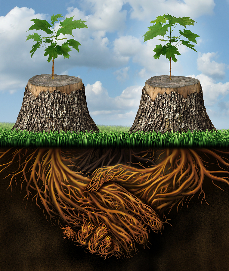 Helping one another as a mutual benefit business support group concept as two chopped trees with new growth of hope emerging as teamwork with the roots shaped as a handshake providing the strength for success.