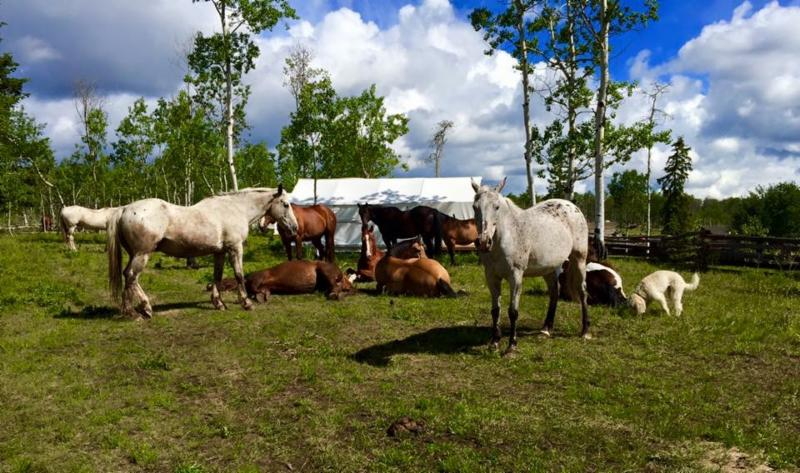 horses by tent