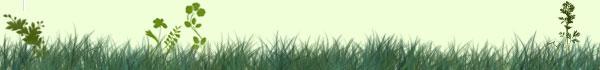 grass-clovers-header.jpg