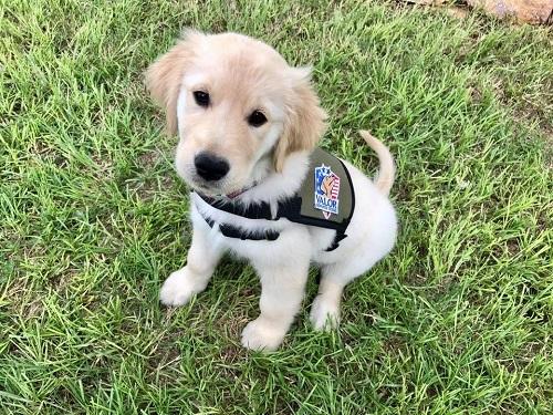Valor Service dog