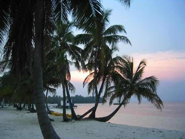 Belize Palms