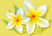 white-flowers-sm.jpg