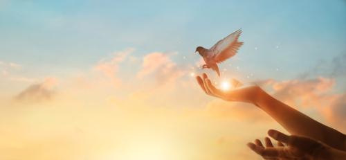 Woman praying and free bird enjoying nature on sunset background_ hope concept