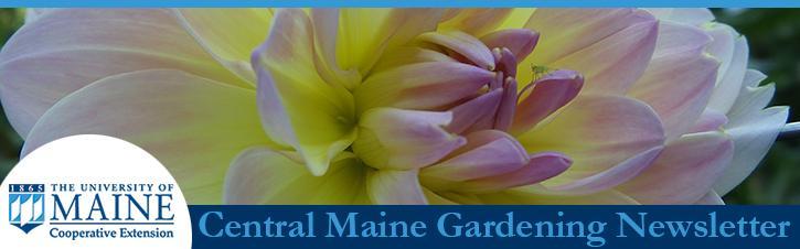 August Central Maine Gardening Newsletter