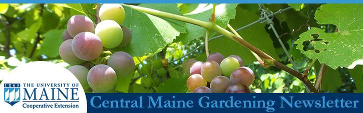 September Central Maine Gardening Newsletter