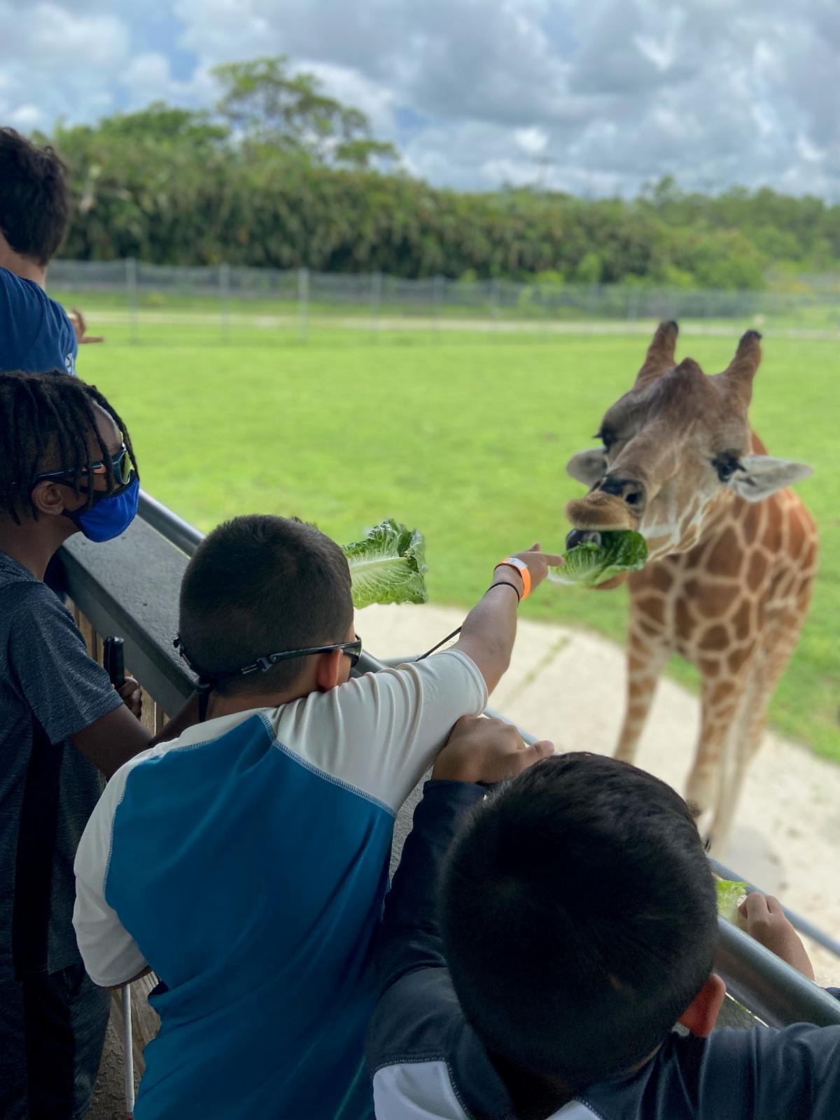 Three boys feeding a giraffe lettuce at Lion Country Safari
