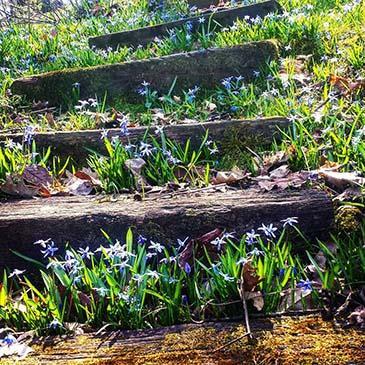 Starhill Forest Arboretum