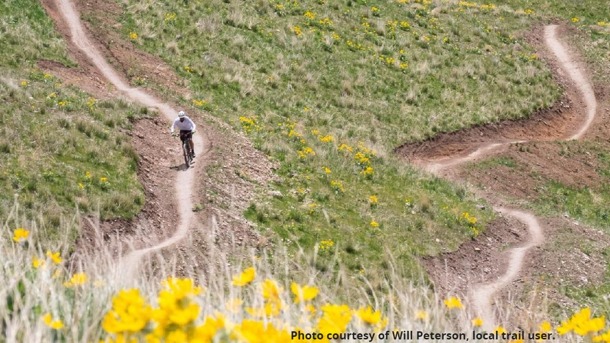 Hillside with biker riding on single track natural land trails with blooming yellow wildflowers