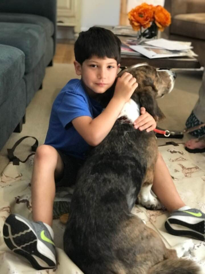 Chase and The Governor Pet Therapy Dog