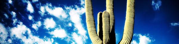 seasonal_cactus.jpg