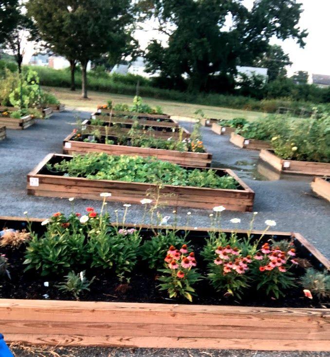 Hilton Community Garden plots