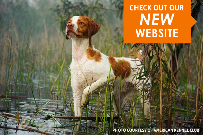 Check Out our New Website, www.americanbrittanyrescue.org
