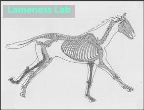 Running skeleton_gif