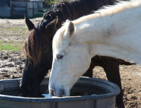 two horses at water trough