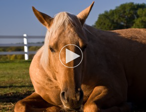 Colic_horse_video
