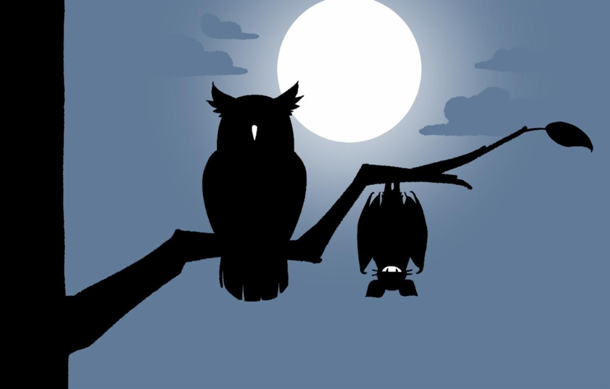 bat and owl.jpg