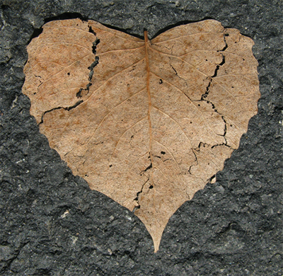image of a dry, cracked, heart-shaped leaf on black pavement