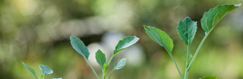 Environmental Impact Investing