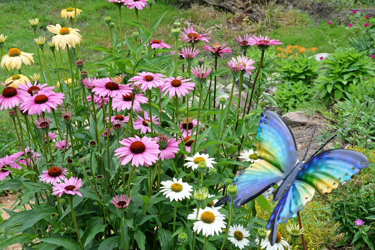 Langabee Butterfly Garden