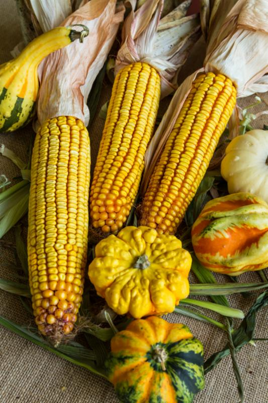 autumn_corn_gourds.jpg