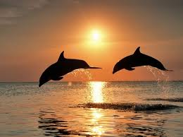 Dolphins at events