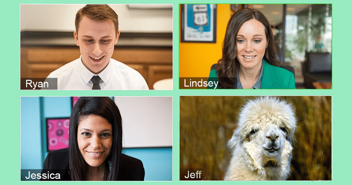 Rent a llama for your next Zoom meeting