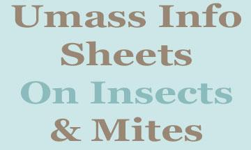 info sheets on insects