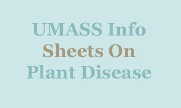 info sheets on diseases