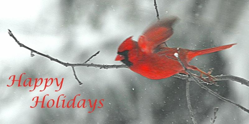 A Bright red Cardinal wishing everyone Happy Holidays