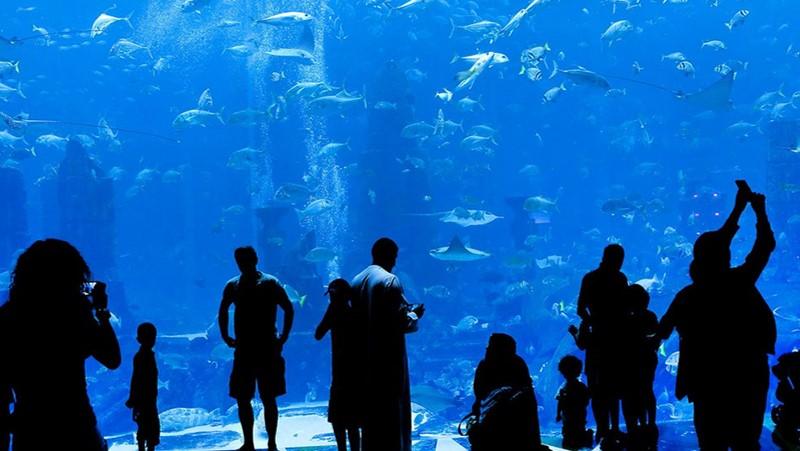 Dubai Aquarium No 1