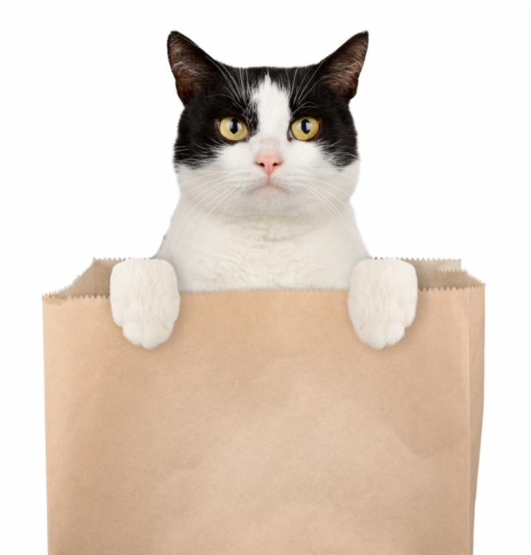 cat_in_box.jpg