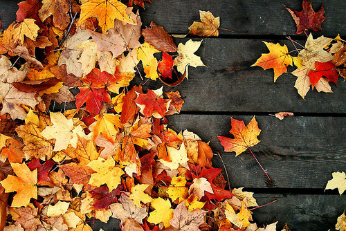 Autumn leaves scattered across a brown porch.