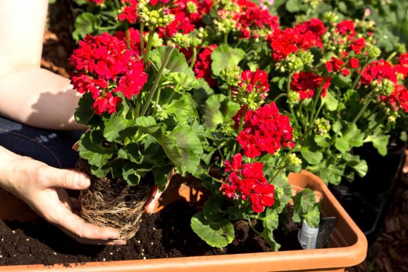 planting_time.jpg