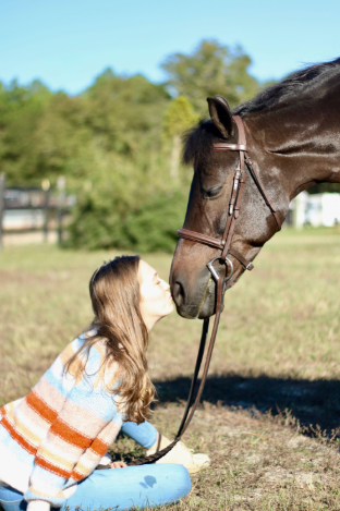 lessons horses teach us