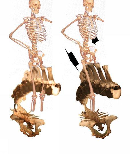 rider spinal rotations