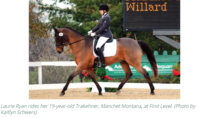 Dressage Today