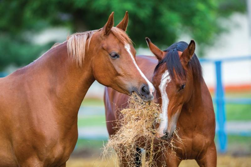 Horses need salt