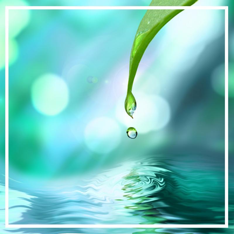 green_leaf_water_drop.jpg