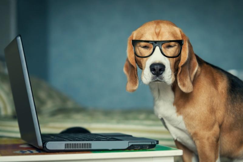 sleepy_beagle_glasses.jpg