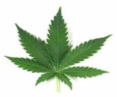 Cannabis for DPN