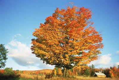 autumn-orange-tree.jpg
