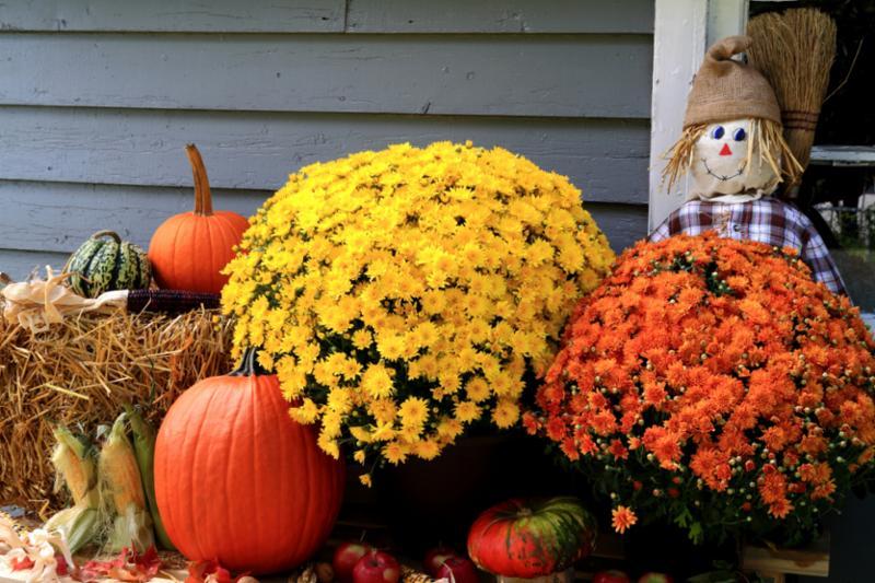 thanksgiving_decoration.jpg