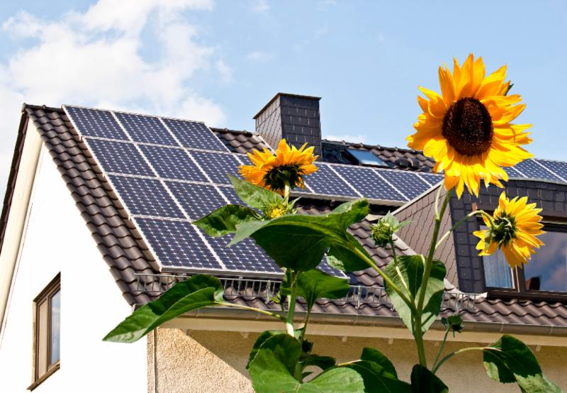 solar panels on roof of house with sunflowers in the forefront