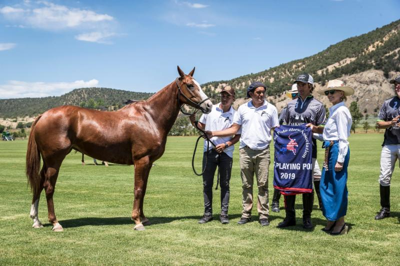 Rumba_ owned and played by Sebastian Merlos_ American Polo Horse Association Best Playing Pony.