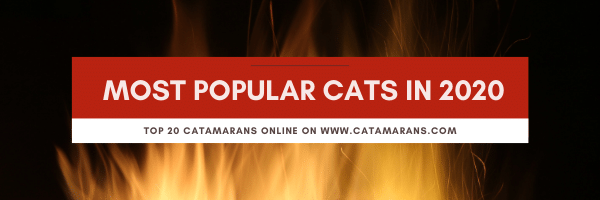 The 10 Most Popular Cats in 2020