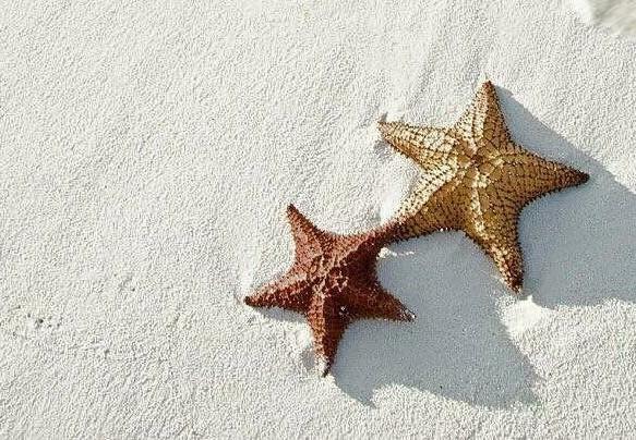 Twin Starfish Fund