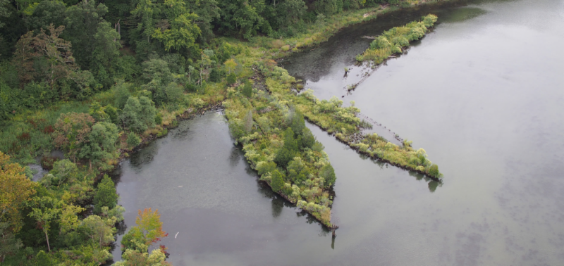Mallows Bay contains more than 100 known and potential shipwrecks.