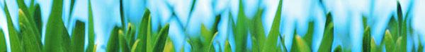 grass-blades-banner.jpg